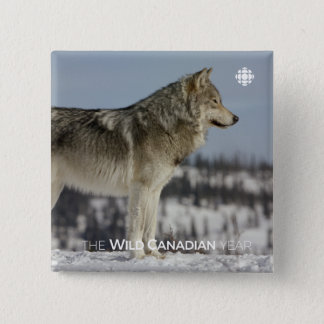Winter - Wolf 15 Cm Square Badge