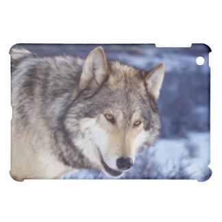 Winter Wolf 2 iPad Mini Covers