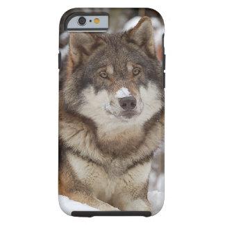 Winter Wolf iPhone 6 Case