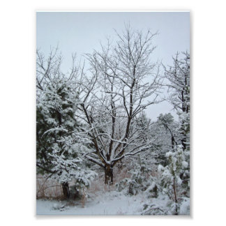 Winter Wonderland Photo Print