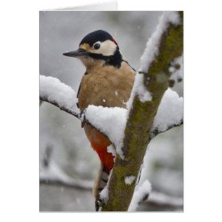 Winter Woodpecker Card