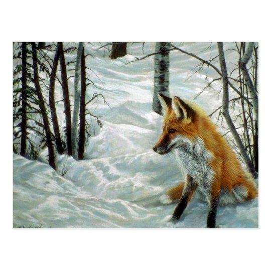 Winter woods, Fox Postcard