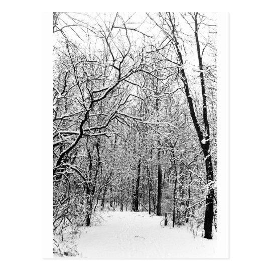 Winter Woods Postcard