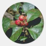Wintergreen (Gaultheria Procumbens) flowers Round Sticker