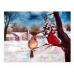 Winters Serenity Cardinal Postcard
