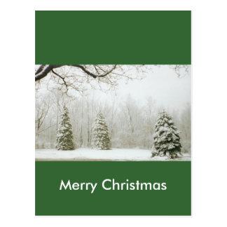 Winter's Trees Postcard