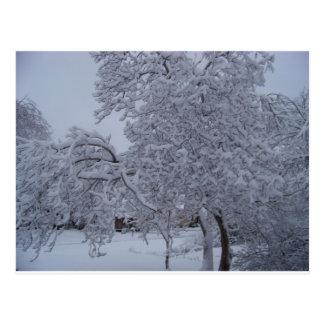 winterstorm2010(Oklahoma) Postcard