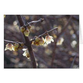 Wintersweet (Chimonanthus praecox) card