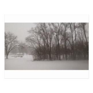 Wintery Trees Postcard