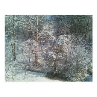 Wintery Woods Postcard