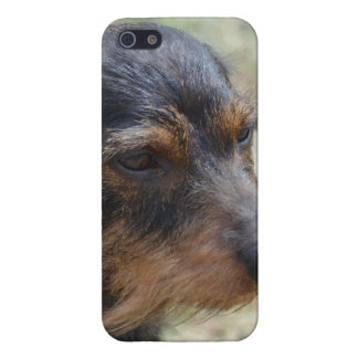 Wire Haired Daschund Dog iPhone 5/5S Case
