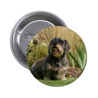 Wire-haired Standard Dachshund 6 Cm Round Badge