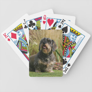 Wire-haired Standard Dachshund Bicycle Playing Cards