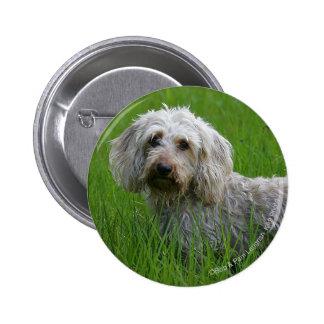 Wire-haired Standard Dachshund in Grass 6 Cm Round Badge