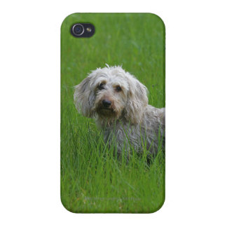 Wire-haired Standard Dachshund in Grass iPhone 4/4S Cases