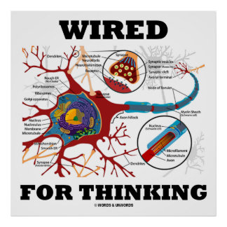 Wired For Thinking (Neuron Synapse) Posters