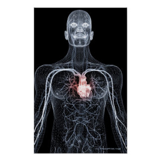 Wireframe of the blood vessels in the upper body 2 poster
