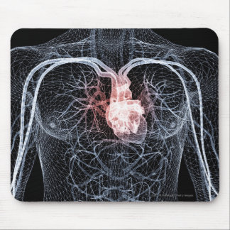 Wireframe of the blood vessels in the upper body mouse mat