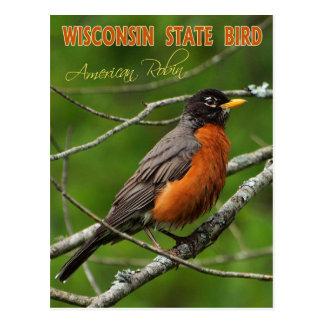 Wisconsin State Bird - American Robin Post Card