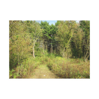 Wisconsin Woods and Trail Nature Photo Wall Art