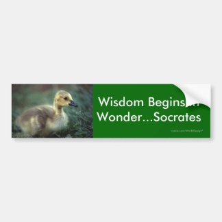 Wisdom Bumper Sticker