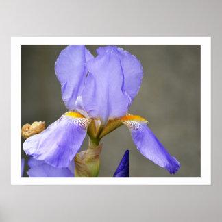 Wise Iris Flower Posters