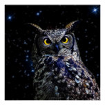 Wise old Owl and stars Poster