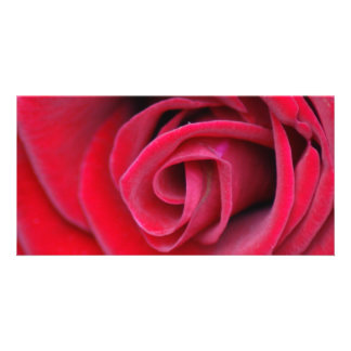 wish card red rose photo card