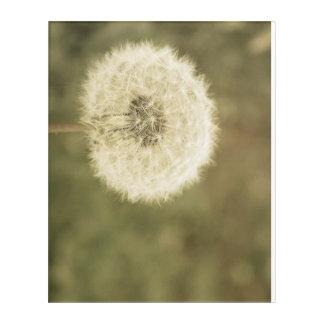 wishing flower aged5 acrylic print