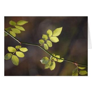 Wispy Leaves Note Card