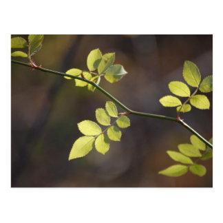Wispy Leaves Postcard