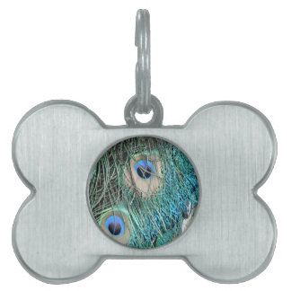 Wispy Peacock Feathers Pet Tag
