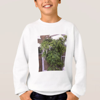 Wisteria and Roses Sweatshirt