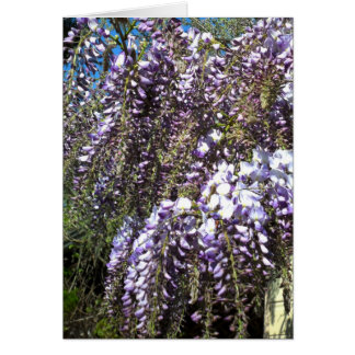 Wisteria Blank Greeting Card