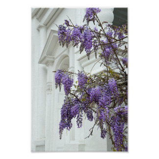 Wisteria, Historic House Charleston South Carolina Poster
