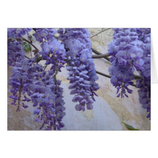 Wisteria in Provence Card