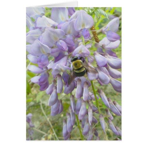Wisteria & Male Carpenter Bee Note Card