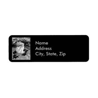 Witch and black cats in moonlight return address label