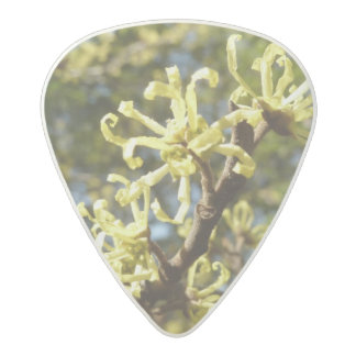 Witch Hazel Flowers Acetal Guitar Pick
