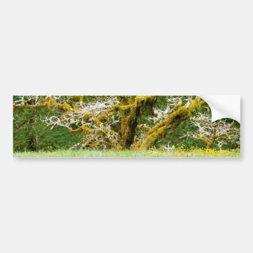 Witching Tree Bumper Stickers