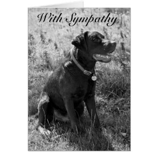 With Sympathy ( Pet  Dog) Card
