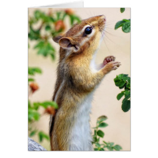 Within Reach - Chipmunk Card