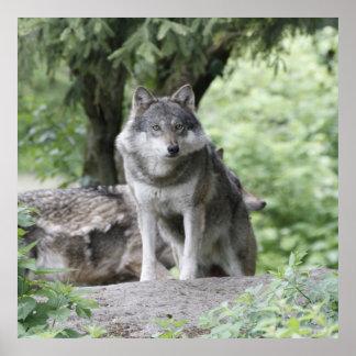 Wolf 14AJ Poster