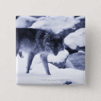 Wolf 15 Cm Square Badge