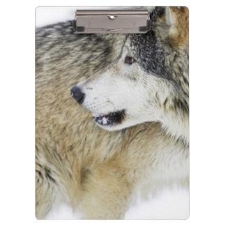 Wolf 2 clipboard