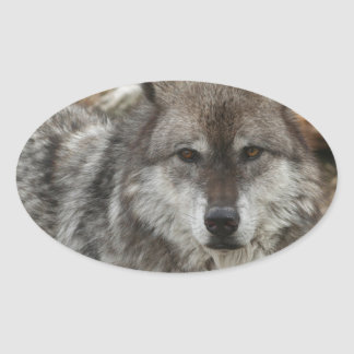 wolf animal face eyes canine forest zoo park oval sticker
