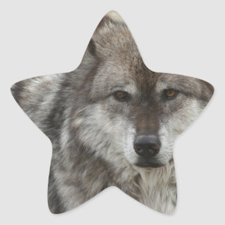 wolf animal face eyes canine forest zoo park star stickers