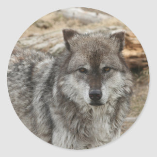 wolf animal face eyes canine forest zoo park round sticker