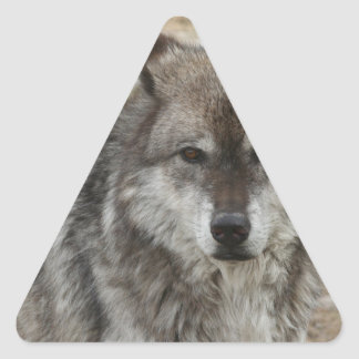 wolf animal face eyes canine forest zoo park triangle sticker