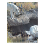 Wolf Animals Peace Love Nature Park Wolves Destiny